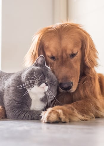 cat and dog exams in lakeland, fl